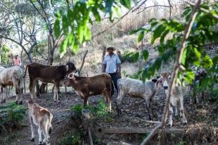 Rodrigo Jijón es uno de los ganaderos extorsionados por el crimen organizado. Ayutla de los Libres, Guerrero. 1/27/2013